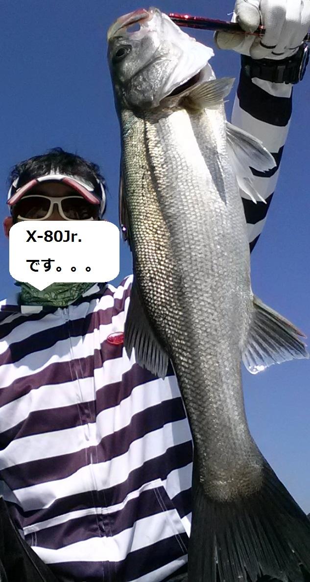 シャローフィッシュを獲る秘訣 – X-80Jr.で釣れる3つの要素