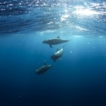 cropped-dolphins-918752_1920-1.jpg