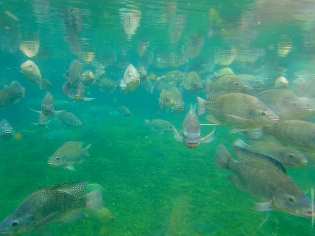 fish-1011963_640
