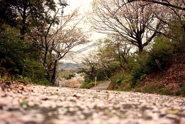 [D] 幻のディープクランク伝説・・・悲運に散った新星・高梨洋平のドラマ