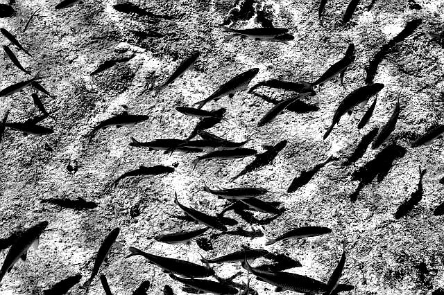 school-of-fish-1272656_640