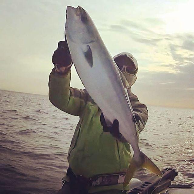 ワラサ、釣れてます… #jigging #遠州灘 #ジギング #浜名湖沖漁礁 #小カンパチも連発 #バックドロップ100g #まだ冬っぽく無いかも…