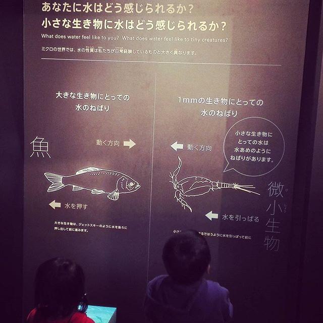 """""""水の硬さ""""が気になる今日この頃… #琵琶湖博物館 #滋賀 #北大祐理論 #クランキング #強さの源泉がそこにある? #正直まだまだ全然分かりません…"""