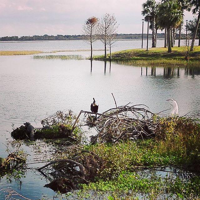 フロリダの冬は、夏でした…。 #最高気温何と25℃ #しかも湿度も85% #普通に蒸し暑い #ちなみにみんな半袖 #トロピカルな鳥も一杯鳴いてる #公園にワニがたくさん居るのですが…