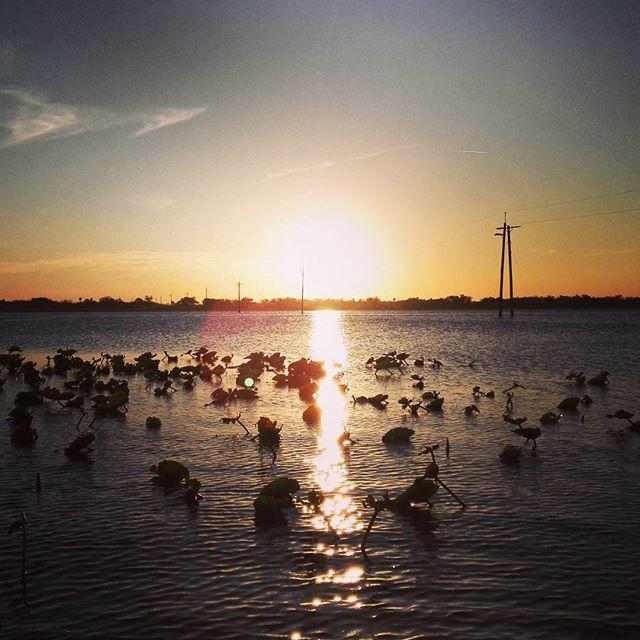 フロリダの夕陽は、燃えています…
