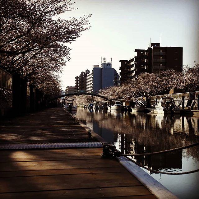 南国土佐を後にして… #高知県 #桜はそろそろ見頃です #食べ物も美味しいし #宿も手頃で滞在しやすい #何より人が暖かいです #釣りはもちろん家族旅行にもお薦めです…