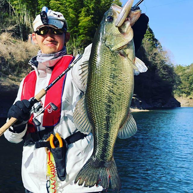 早明浦遠征ラスト、ドラマなスイムベイトフィッシュ頂きました… #早明浦ダム #bassfishing #ラストポイントでヒット #最上流フイッシュ #ドライブシャッド #osp #ランチアさんからのもらい物w #天気は最悪だったけど #最高に楽しかったです! #お世話になった皆さま本当にありがとうございました!