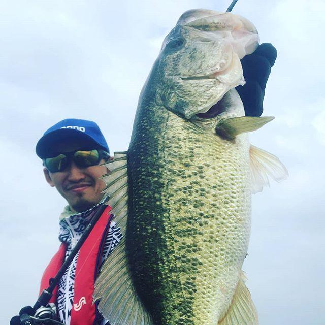 やっぱり琵琶湖は偉大ですね… #biwako #lakebiwa #bassfishing #このクラスじゃ全く大きく感じない #下手したらアベレージ50cm? #ロクマルももはや普通 #この日はサイズは出なかったけど  #ミドルサイズが数釣り出来るのは逆に安心? #将来のランカー候補ですもんね…