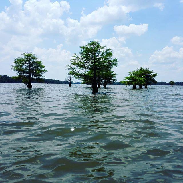 毎日毎日、灼熱のルイジアナです… #35℃超え #とにかく日差しがキツい #そして意外と湿度が高い #ガチで日本の真夏です…