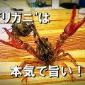 :[アメリカ釣戦記16] ザリガニは「カニ」だった!?