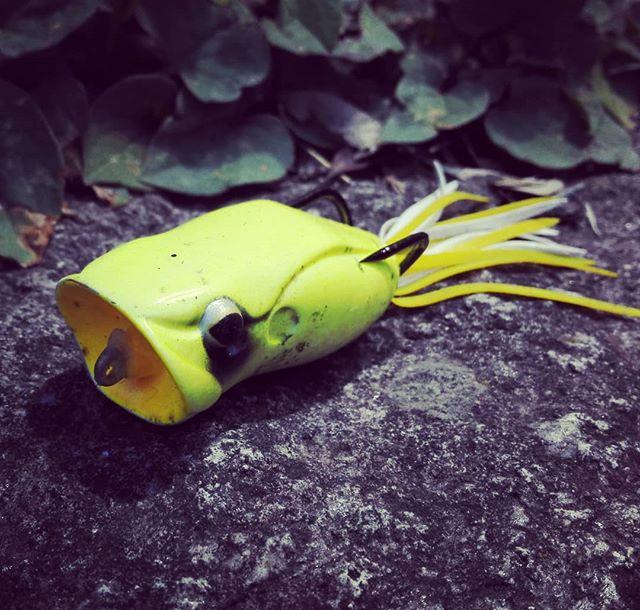 """""""ポッパーフロッグ""""、カバーに強い感じの素材感ですね…。#エバーグリーン#evergreen #popperfrog #素材が厚くて丈夫な感じ#根掛かりしにくい#オカッパリ でヘビーカバーを攻めるのにgood?#ただしフッキングはちょっと難しいかもしれません…"""