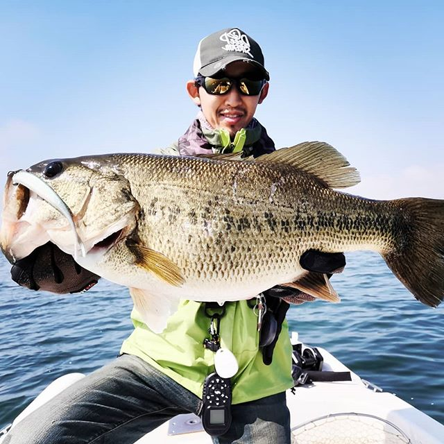 イサナ4.8inchのミドスト、なかなか良い魚出ております…#ミッドストローリング #ミドスト #isana #カエス #kaesu #スウィングヘッド #浮いた魚にはホント強い #クリアシャローには最強? #浅い所の魚増えましたね…