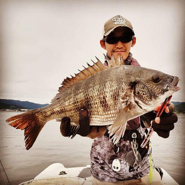 浜名湖よ、私は帰って来た…!#フローシャッド #意外と数はそこそこ釣れる? #でもサイズを上げるのが難しい #表浜名湖にシーバスの魚影も #産卵期のメガマゴチも魅力 #さて明日の大会どうなるでしょう? #Js浜名湖みっかび釣り大会 #jshamanako