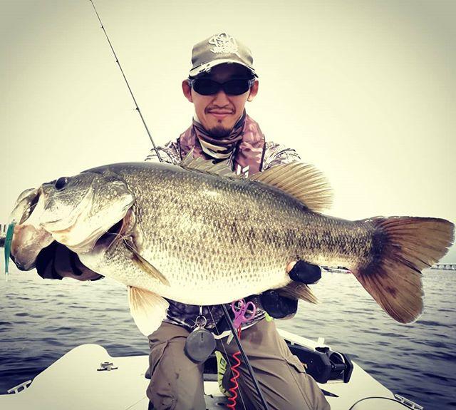 3kgUP捕獲!i字形の釣り、ようやく分かりかけてきたかも…#琵琶湖 #バスフィッシング #i字系 #ワカサギパターン #55cmなのに3kgUP #他40cmクラス3本 #この体型って北湖の魚? #苦手なフィネスの釣りですが #ライトラインのファイトも痺れますね…