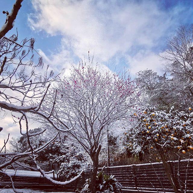 今朝の滋賀は…雪!晴れ間が覗くとホント綺麗ですね…#大津 #琵琶湖大橋周辺 #積雪 #今シーズン2回目 #そして最後? #風もそこそこ吹いてます #道路の積雪はありませんが #いらっしゃる方はお気をつけて…