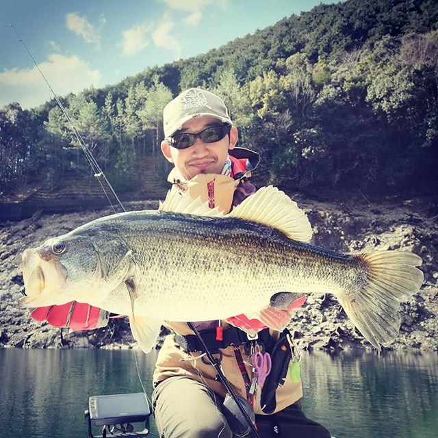 池原産50UP捕獲!リザーバーの釣り、楽し過ぎです…#バスフィッシング #池原ダム #ビッグバスの聖地 #ビッグじゃないのもたくさんいる #ベイトも豊富で湖が豊か? #その割に食わせられないのが不甲斐ない #難しくも楽しいリザーバーにハマりそうてす…